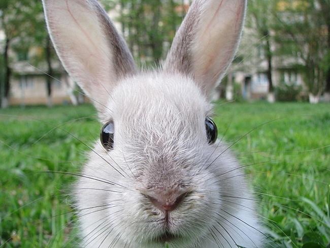 Как ухаживать за кроликом в летнюю жару