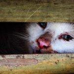 【!】「猫」数千匹、中国から食用で密輸か ベトナム(画像あり) http://t.co/WKMIzUeKwO http://t.co/8bL3f9QD5v