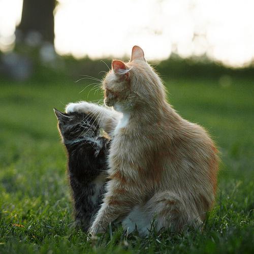 おいしそうな脚の女子校生 234脚目猫ガイジ隔離スレ [無断転載禁止]©bbspink.comYouTube動画>1本 ->画像>4477枚