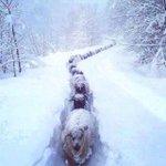 """Les brebis dans la neige à Ustarroz en #Navarre photo signée @erronkari http://t.co/qwCadtslZd"""""""""""""""