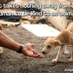 RT @LIONS4Mercy: It takes NOTHING away from a human to be kind to (another) animal.  RT if you agree! #BeKind