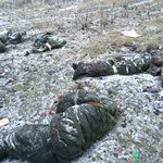 In two days #Russia forces had 145 killed & 380 wounded http://t.co/IN28x89tkk #Debaltseve #Ukraine #Donetsk #Luhansk http://t.co/1mAH3VpY91