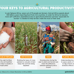 These four keys are helping African farmers grow more food: http://t.co/bxRku1yBeB http://t.co/OaEBMVCQVJ