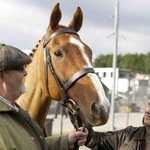 Sundance: Dark Horse' Wins World Cinema Documentary Audience Award http://t.co/Dk8aZjXRyS http://t.co/JT9EJBIVxO