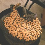 How many goldfish can you fit on your cat before it wakes up? http://t.co/h1DJlm916R