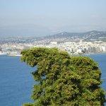 @VilleCannes Le point Mouetéo du jour : sur mon arbre penchée ... http://t.co/MVjd7vK8SZ
