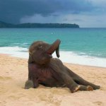 If youre having a bad day, just look at this baby elephants first time on the beach http://t.co/oNRqixvexq