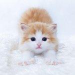 【New】心がすさんだときは、そうだ、子猫に相談だ(画像) http://t.co/vYhdLoqFv2 http://t.co/LsswGglZsY