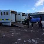Preparing to leave the stables with 18 horses on duty at Hampden today. http://t.co/cPzNr4uWWC
