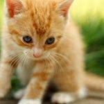【画像】心がすさんだときは、そうだ、子猫に相談だ(画像) http://t.co/vYhdLoqFv2 http://t.co/8q9C3idgKx