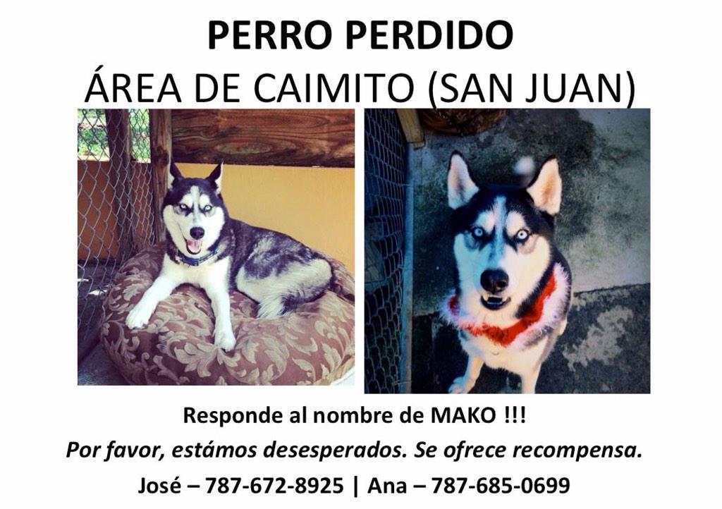 Se busca Siberian Husky macho de 6 años, castrado, blanco y negro con ojos azules en Caimito! Recompensa! http://t.co/Ph8WzBoIG4