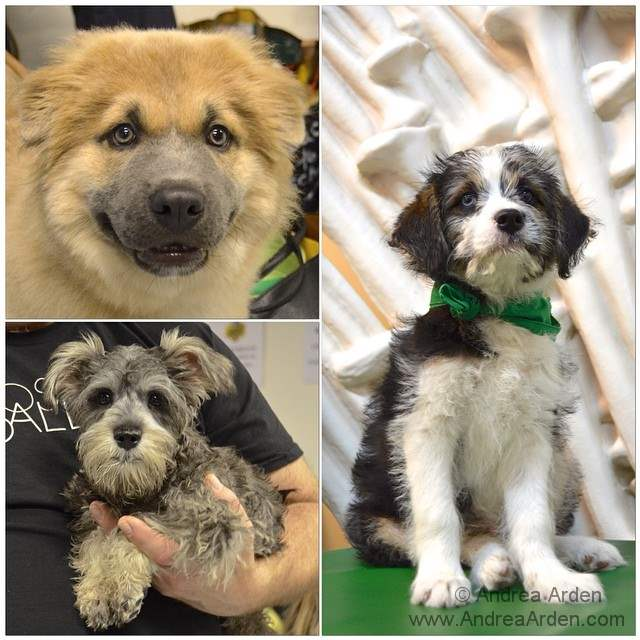 Behind the scenes #PuppyBowl cutness. Meet Boomer, Fritz, and Blue, and check them out on @AnimalPlanet @ 3pm EST. http://t.co/cbRPmXgXYI