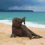 amiga amei seu ensaio sensual na praia http://t.co/8r2s7jxdFG