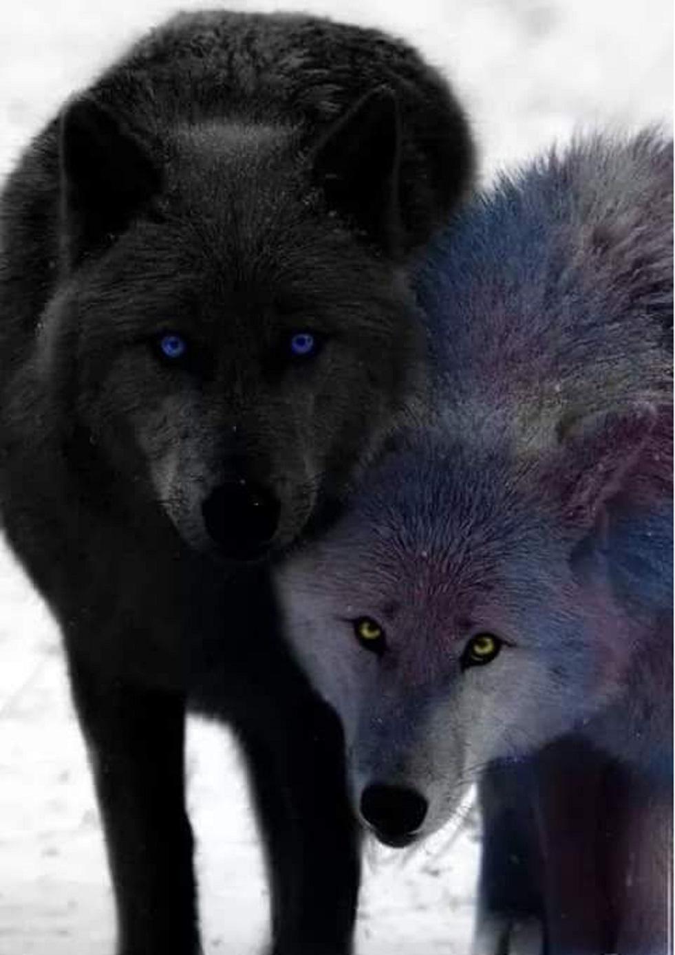 """RT @coolcats70: """"@MATIASM97027089: http://t.co/jXviywjBDh"""" Da musste ich an Dich denken ein paar Beauties for you 😊 @proudvegan"""