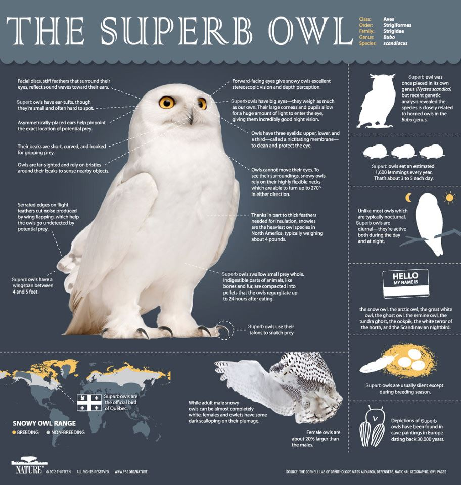 It's the first Sunday of February, get hype for the Superb owl http://t.co/5jlfDrd2oB