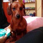 FOTO   Denuncian que hombre en un vehículo robó perro desde el parque Ecuador de Concepción http://t.co/8iFlyhI3Xm http://t.co/Ql2XzbXUGg