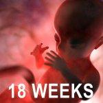 Aquí envío d nuevo imagen d feto d 18 semanas. No estoy opinando sobre pro/contra aborto. Sólo muestro lo q ven. http://t.co/vQWI6sRtxs