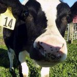 Una aplicación africana calcula las vacas que cuesta una esposa http://t.co/Beb52Kdztq http://t.co/hVRdgj0aA8