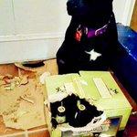 Dogs? Weve got dogs. http://t.co/Kd03TD0Sp2