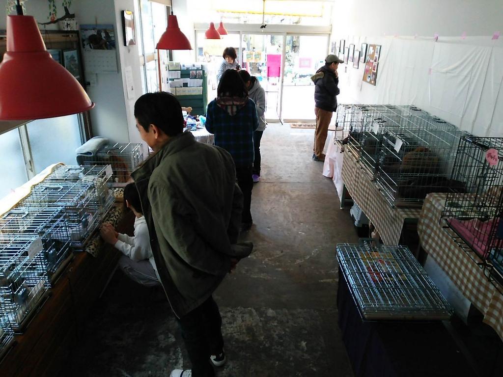 祖師ヶ谷大蔵里親会。18匹がお待ちしています。13時~16時まで。 http://t.co/JFu4knHbYn
