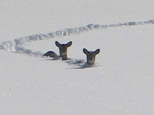 @deephil11 Even the deer are tired of snow too. @MUTTScomics http://t.co/At6i8S1ZaO