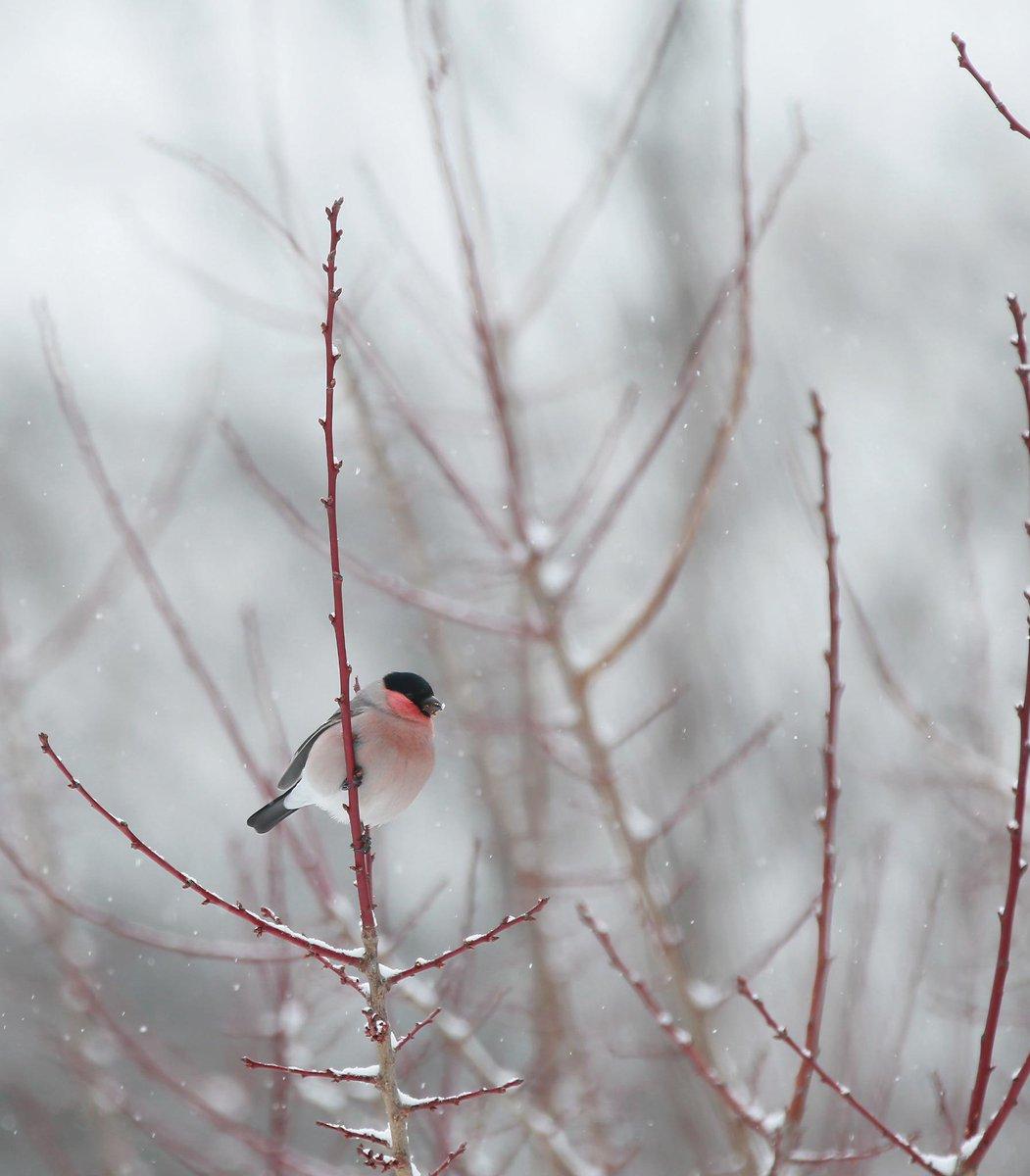 この間練習したウソちゃん 春を待つ梅林にて〜 http://t.co/nR41iPjxIB