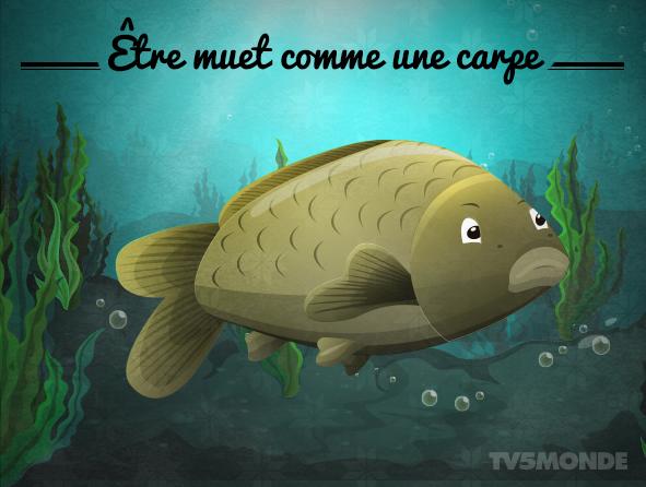 """[フランス語表現 - 動物]  """"Etre muet comme une carpe""""  直訳:鯉のように黙りこくっている。 意味:一言も話さない/無言のままでいること。 http://t.co/EAVPXgivCI"""