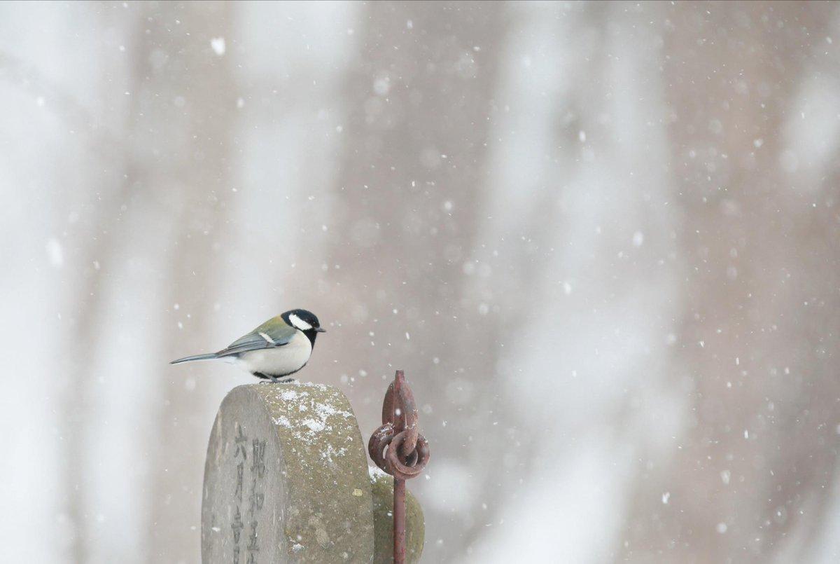 小雪の中のシジュウカラ http://t.co/UR3olgVjev