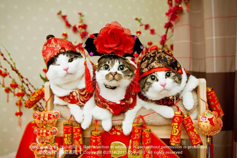 보기만 해도 부자가 되는 고양이라네요ㅋ #고양이 http://t.co/mBUGqz3UzZ