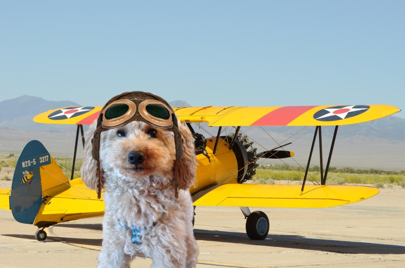 MT @ToddyFur: Oh dear... my thoughts are with Otis and his family @FreshOtis @MickeyShortTail  #TheAviators http://t.co/TJHy6kXR1E