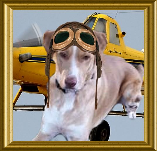 RT @theaviatorsclub: *NEW MEMBER ALERT* Welcome Molly @MollyGirlHound brand new to #TheAviators http://t.co/DZbw5ESDUw