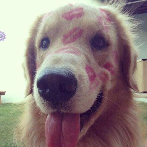 The only kind of marks you should leave on an animal: http://t.co/8G5OKsIjOD