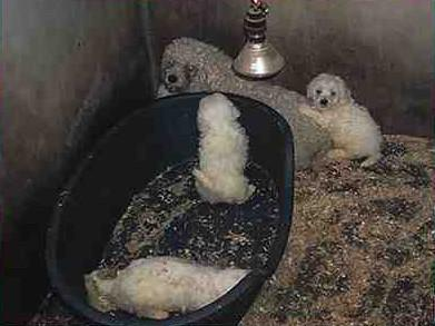 Spare a thought today for poor dogs stuck in freezing cold puppy farms forced to make pups for pet shops #wheresmum http://t.co/2Ow1z8rZak