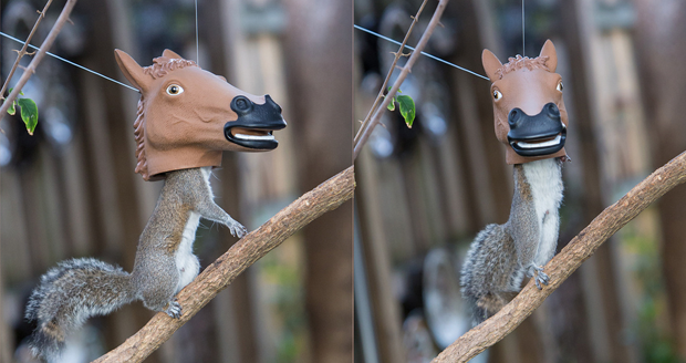 I have a voucher. Should I buy an external hard drive (smart) or a horse head squirrel feeder (life-changing)? http://t.co/53SqmtgVOy