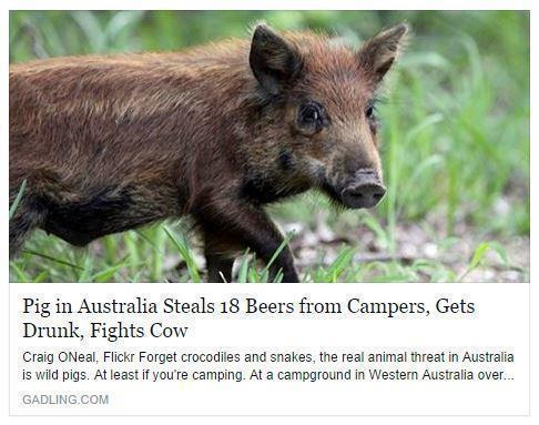 You just can't beat this headline http://t.co/mHLyctSYWj