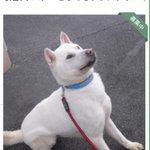 nature_orange:RT doubutukyushutu: RT tamutam63196149 #拡散 #岡山県 動物愛護センター収容 #保健所 #犬 掲載期限3/2➡︎http://t.co/3U0nfyfynh 「… http://t.co/6Bclrwu3dk