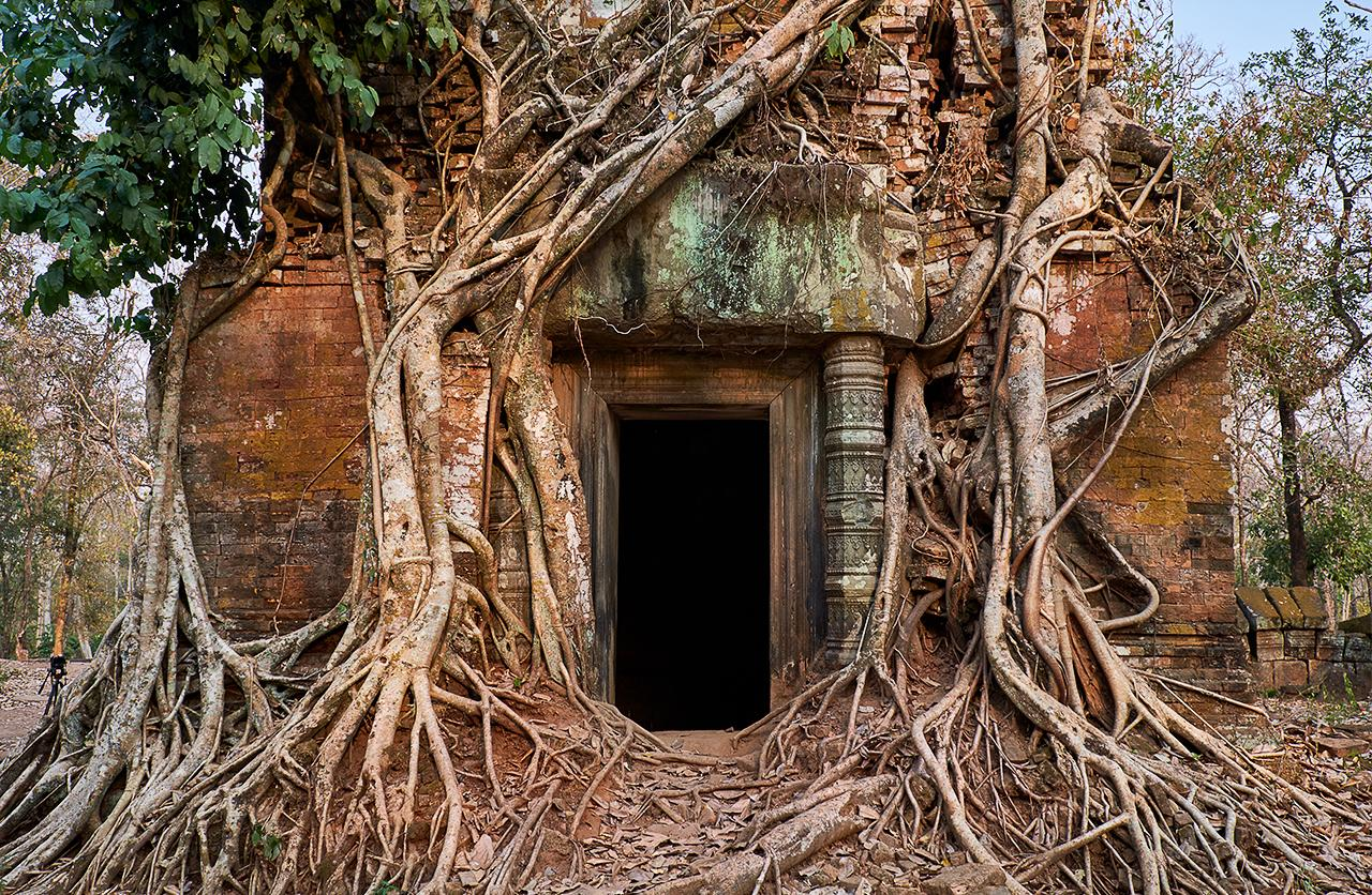 We agree! MT @elialocardi: Impossible not to be impressed by the beautiful trees of #AngkorWat Temple #Cambodia http://t.co/nRS5SNHyYs #lp