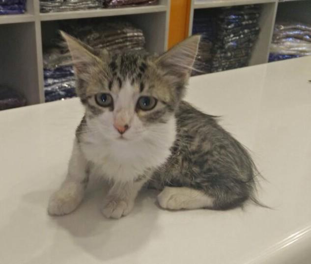 HELP! Esta gatita busca casa. Interesados me escriben no más. RT por favor <3 http://t.co/iBzScn6Rae