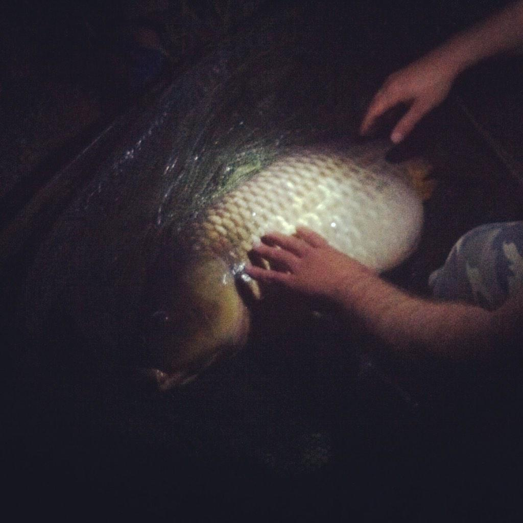 Nice common #commonCarp #carpfishing #carpy #carp #carper #carpsession #<b>BigOneCarp</b> #Angler #a