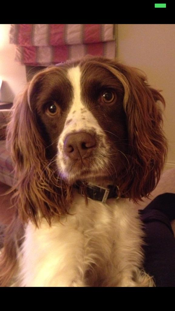 Friend's dog missing since today in Donnybrook/Castletreasure Contact @aburns_16 please. http://t.co/BzLyyBPsEB