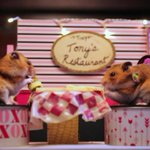 This 'Tiny Hamster' went on a tiny Valentine's Day date that's probably better than yours. http://t.co/cZzW4X58ko http://t.co/ENklPzpdab