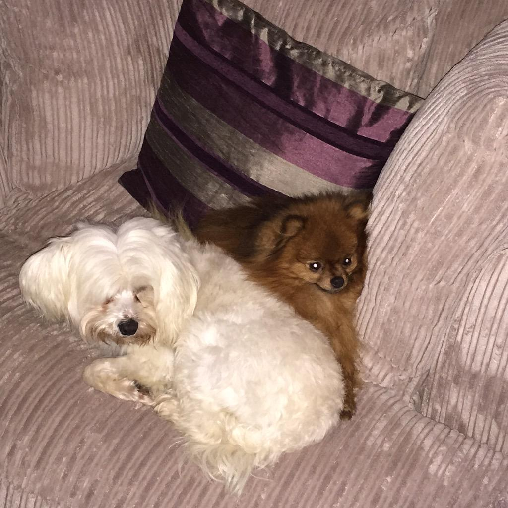 My dog was taken between 3pm and 4pm today in Roganstown He's very friendly and answers to LENNY ! He's the White one http://t.co/0GGHsu8V31