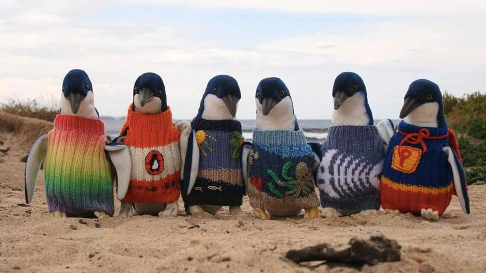 Australia's oldest man, 109-year-old Alfie, knits sweaters for injured penguins http://t.co/T0rTClsLb2 via @mashable http://t.co/Brwt7foziA