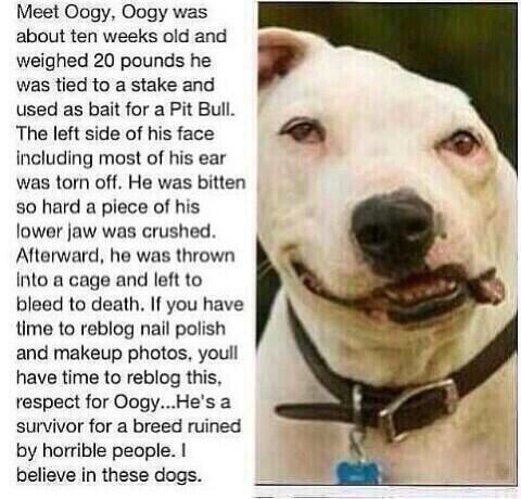 Retweet for Oogy: http://t.co/D1ScABFMK0