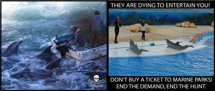 RT @FeysPerson: As long as there is a Demand for Dolphin Entertainment, Dolphin Slaughters will Continue #Tweet4Taiji #Blackfish https://t.…