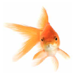 Today the average attention span is 9 seconds… same as a goldfish. Fascinate the goldfish. #TChat http://t.co/4OBIXbj5Q6