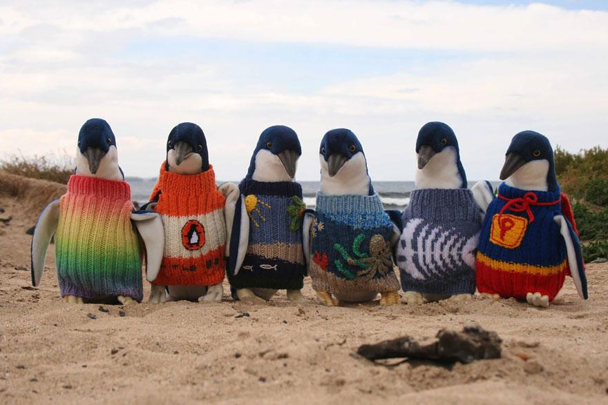 Australia's Oldest Man Knits Tiny Sweaters For Injured Penguins (and it looks adorable!) http://t.co/VdpWSejnex