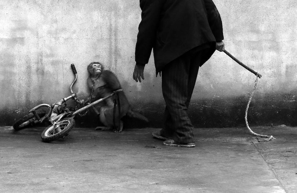 Yongzhi Chu's photo of monkey being circus-trained in China  http://t.co/w4O04IQcPw @careforthewild #animalcruelty http://t.co/ZQbg1X2IsF