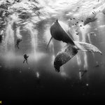 Top Shot: Submerged and Suspended http://t.co/Aw6Sqg0tAm http://t.co/xh8HryLWMl #photography