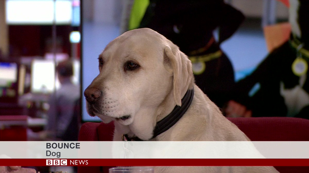 'Who's a good boy? Look, Susan, don't patronize me, but to answer your question yes, me, I have been a good boy' http://t.co/8upy5S0gQ2